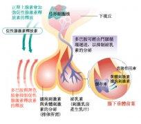 闭经低促性腺激素性性腺功能减退治疗