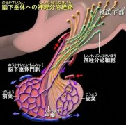 高泌乳素血症 Hyperprolactinemia