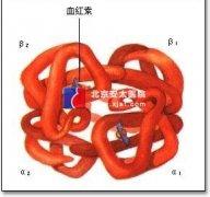 糖化血红蛋白监测意义